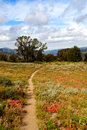 California Hiking Trail Royalty Free Stock Photos