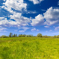 California meadow ranch in a blue sky spring day usa Royalty Free Stock Images
