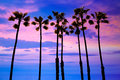 California palm trees sunset with colorful sky group Royalty Free Stock Image