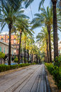 California palm trees a warm summer day and a palmy street Royalty Free Stock Photo
