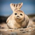California sea lion on beach in morning Stock Image
