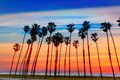 California sunset Palm tree rows in Santa Barbara Royalty Free Stock Photo