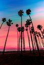 California sunset palm tree rows in santa barbara us Royalty Free Stock Images