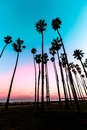 California sunset palm tree rows in santa barbara us Stock Photo