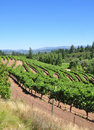 California vineyard Royalty Free Stock Photo