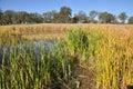 California Wetland Royalty Free Stock Photo