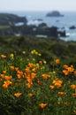 California Wild Poppies and Coastal Spring Royalty Free Stock Photo