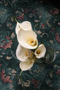 Calla lilies Royalty Free Stock Image