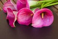 Calla lilly pink fresh flowers on black background Royalty Free Stock Photography