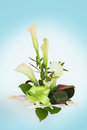 Calla lily bouquet in the background Royalty Free Stock Images