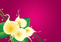 Calla lily floral background Stock Photography