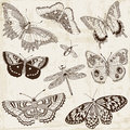 Calligraphic butterfly design elements vector set and page decoration Royalty Free Stock Photos