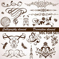 Calligraphic and floral element Stock Photos