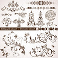 Calligraphic and floral element Stock Images