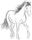 Calligraphic horse illustration on white stock Royalty Free Stock Photography