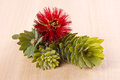 Callistemon flower Stock Image
