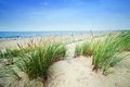 Calm beach with dunes and green grass ocean in the background blue sunny sky Stock Photo