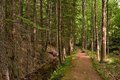 Calm forest path around karlova studanka spa czech republic Royalty Free Stock Photos