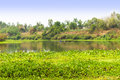 Calm river and green forest, nice peaceful landscape. Royalty Free Stock Photo