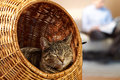 Calm saturday at home with cat lies in wicker basket while owner reads Stock Photo