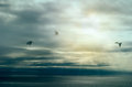 Calm After Storm. Birds Flying over Ocean with Storm Clouds. Wil Stock Images