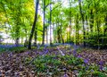 Spring forest theme with tree branch Royalty Free Stock Photo