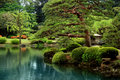 Calm Zen lake and bonzai trees Royalty Free Stock Photo