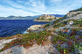 Calvi Citadel seen from Rocks of Revellata Peninsula Royalty Free Stock Photo