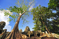 Cambodia, Angkor: The Preah Khan Royalty Free Stock Photography