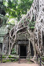 Cambodia - Angkor - Ta Prohm temple Stock Photography