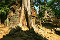 Cambodia's temple of Ta Prohm in Angkor Wat Royalty Free Stock Photos
