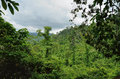 Cambodian jungle southwestern slope of kulen mountain range km from siem reap cambodia Stock Photo