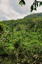 Cambodian jungle southwestern slope of kulen mountain range km from siem reap cambodia Stock Image