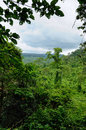 Cambodian jungle southwestern slope of kulen mountain range km from siem reap cambodia Royalty Free Stock Photo