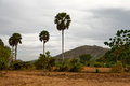 Cambodian landscape the bleak of the province of kampot cambodia Royalty Free Stock Photo