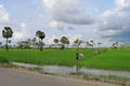Cambodians working in the rice field near siem reap cambodia Stock Photography