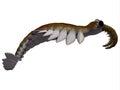 Cambrian Anomalocaris Side Profile Royalty Free Stock Photo