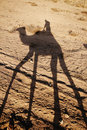 On a camel Royalty Free Stock Images