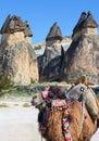 Camel in Cappadocia, Turkey Royalty Free Stock Photo