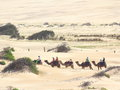 Camel caravan Royalty Free Stock Photo