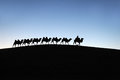Camel caravan in the desert dawn located inner mongolia ejinaqi china Royalty Free Stock Photo
