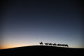 Camel caravan in the desert dawn located inner mongolia ejinaqi china Stock Image