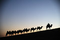 Camel caravan in the desert dawn located inner mongolia ejinaqi china Stock Photos