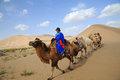 Camel caravan in the desert located inner mongolia ejinaqi china Royalty Free Stock Photography