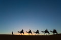 Camel caravan going through the desert Stock Photos