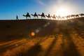 Camel caravan going through the desert Royalty Free Stock Photo