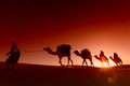 Camel caravan going through the desert Royalty Free Stock Photography