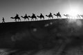 Camel caravan going through the desert Stock Photography