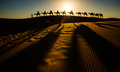 Image : Camel Caravan   silhouette