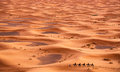 Camel Caravan in Sahara Desert Royalty Free Stock Photo